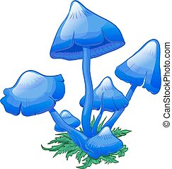 Blue Mushrooms Entoloma hochstetteri, bunch of mushrooms on...
