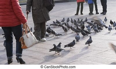Feet of old man with walking stick feeding pigeons on a...