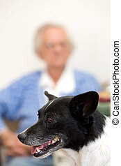 Dog and gran - Closeup of a dog with an elderly woman out of...