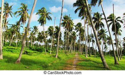 Palm Plantation - Palm trees blowing in the wind.