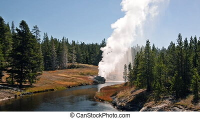Riverside Geyser in Yellowstone - Riverside Geyser erupting...