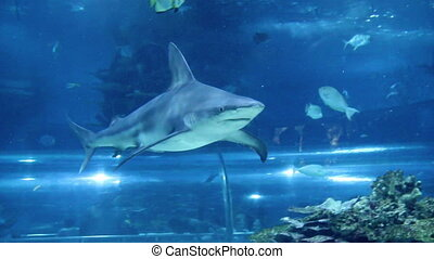 shark swimming in aquarium