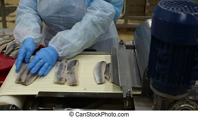 Fish preserves production conveyor - A worker places fish...