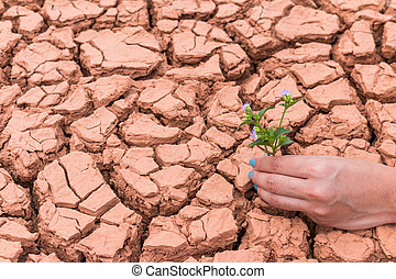 Human gardening the flower on cracked earth to help the...