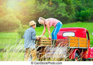 Senior couple harvesting apples, loading them into vintage...