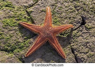 Red starfish on the beach.