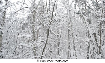 Snow falling in forest with tree trunks swaying gently in...