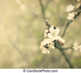 Vintage spring flowers - Blossoming spring tree Image in...