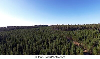 360 Degree Forest View - Taking a 360 degree aerial view of...
