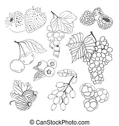 Berries collection for coloring book - Hand drawn berries...