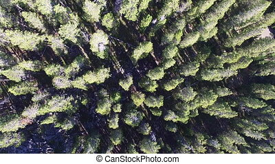 Looking Down on a Forest - Looking down of Bighorn National...