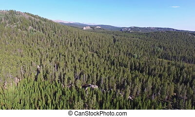 Bighorn National Forest Aerial - Aerial view of dense pine...