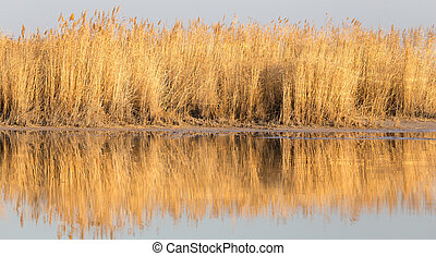 reeds on Lake Outdoors