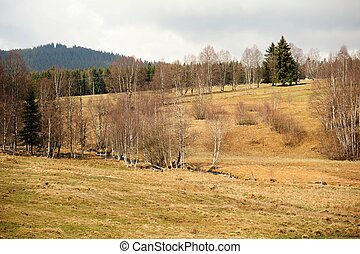Spring landscape in Sumava - Spring landscape with meadow,...