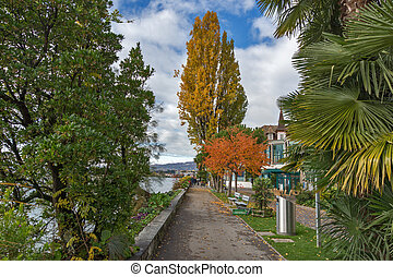 embankment in Montreux - Yellow tree on embankment in...