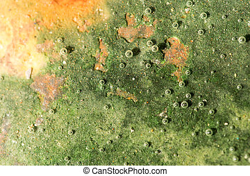 green algae on the metal under water