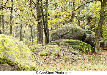 Boulder In Forest - Image of the big boulder in the...