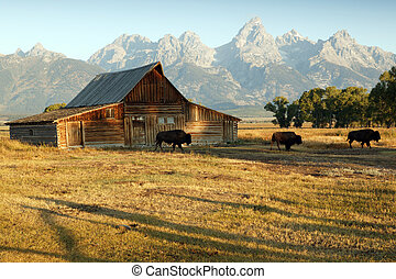 grange, et, Grandiose, teton, national, Parc