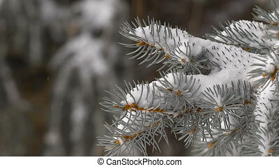 Christmas background. beautiful snow-covered fir branches....