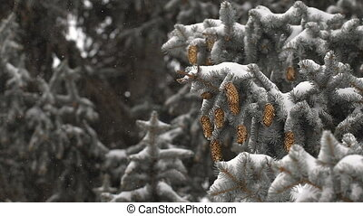 Christmas background. beautiful snow-covered fir branches...