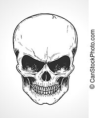 human skull - Vector illustration of detailed human skull