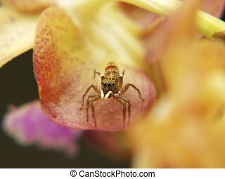 Jumping spider - A macro headshot of a jumping spider on...