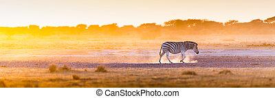 Zebra Sunset Africa - Zebra at sunset in Botswana, Africa...