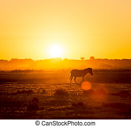 Zebra Sunset Africa - Zebra at sunset in Botswana, Africa...