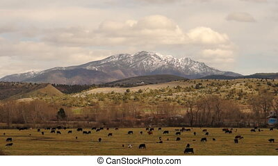 Eastern Oregon Canyon Mountain Ranch Cow Livestock Malheur...