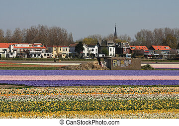 Dutch Floral industry, flowers on a field - Dutch floral...