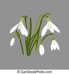 Snowdrop. Vector illustration on grey background