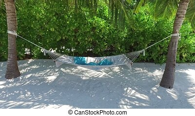 hammock between palm trees on tropical beach - travel,...