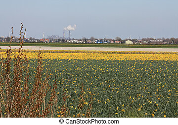 Dutch landscape in springtime - Dutch floral industry,...