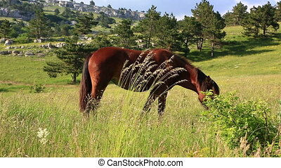 Chestnut horse grazing on green field - Brown horse grazing...