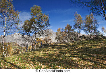 the mountains in the trees - autumn mountain landscape of...