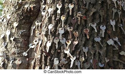Key tree close up