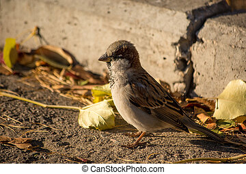 Sparrow basking in the sun