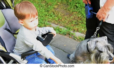 Little boy and a dog - Cute little boy in baby stroller...
