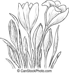 Hand drawn crocus flowers. Elegant vintage card. Vector...