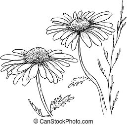 Camomile hand drawn flowers background, vector flowers...