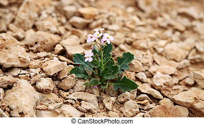 Lonely purple flower growing on dried cracked earth