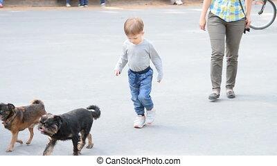 Child following two small dogs - Cute little boy walking...
