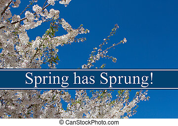 Spring has Sprung Message, A tree in full bloom with blue...