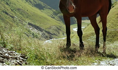 Home horse on hill - Against background of Svan village in...