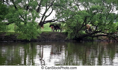 Summer view at forest pond and horses walking by -...