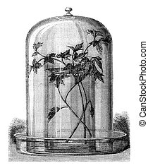 Aquarium for the study of diatomaceous, vintage engraving -...
