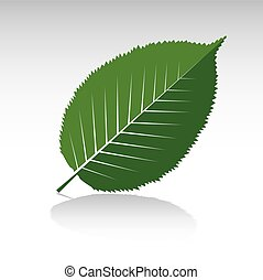 Green Hornbeam Leaf Vector illustration and icon
