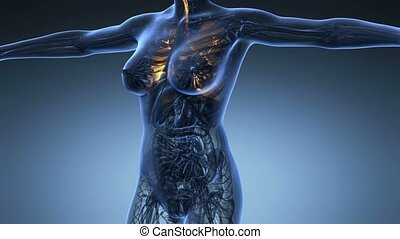 science anatomy of human body in x-ray with glow lungs on...