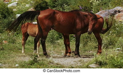 Family of horses on nature
