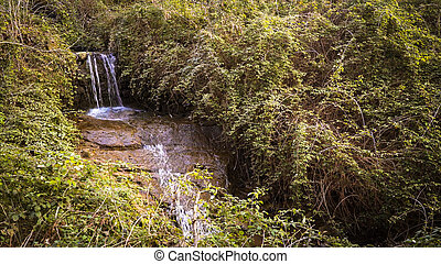 Cascade of a mountain stream in the vegetation.